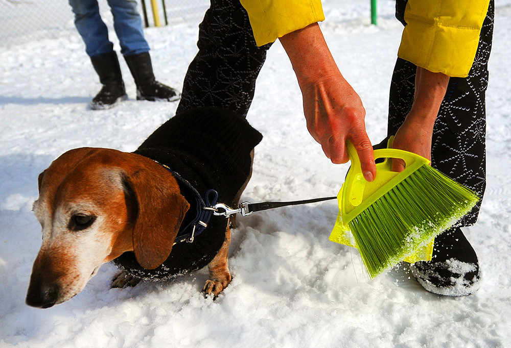 Как отучить собаку копать ямы во дворе: 12 простых решений