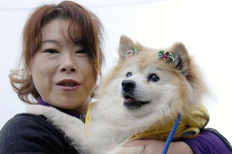 Обзор собак-долгожителей: полный список пород, которые живут дольше других