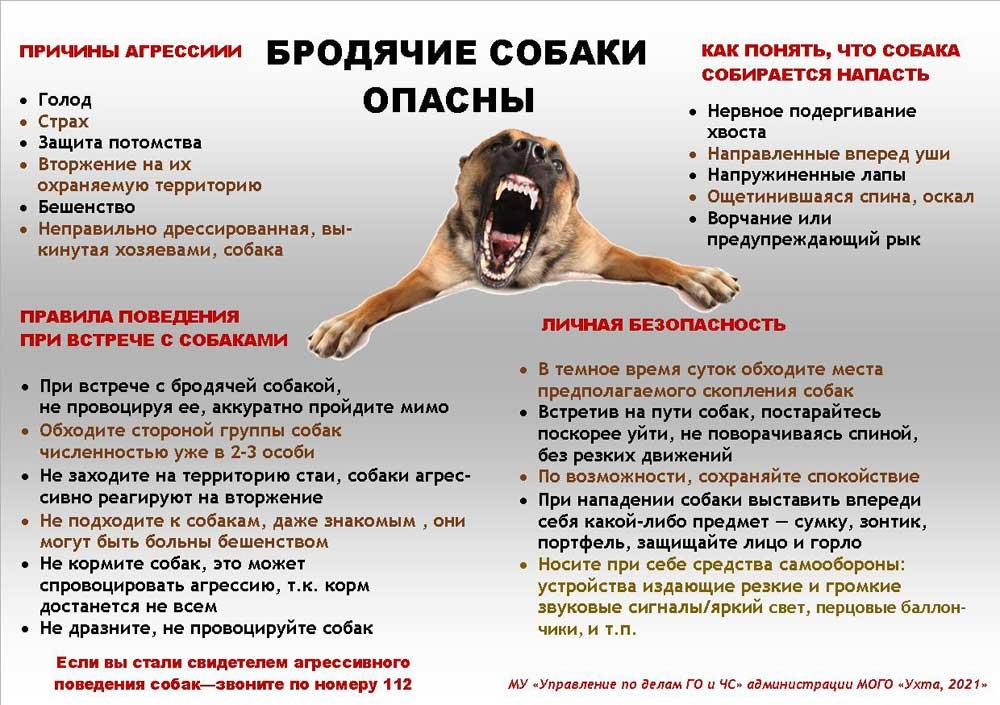Как защититься от стаи бродячих собак?
