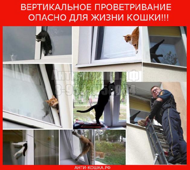 """Падение кошки с большой высоты (высотная травма у кошки). ветеринарная клиника """"зоостатус"""""""