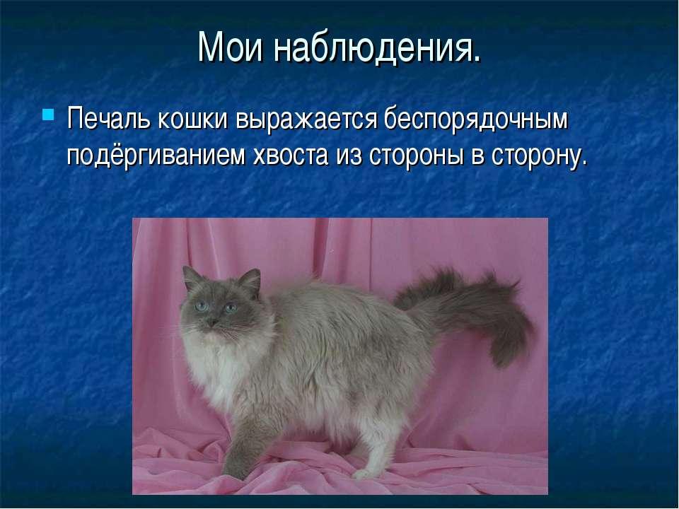 У кошки висит хвост — причины, что делать