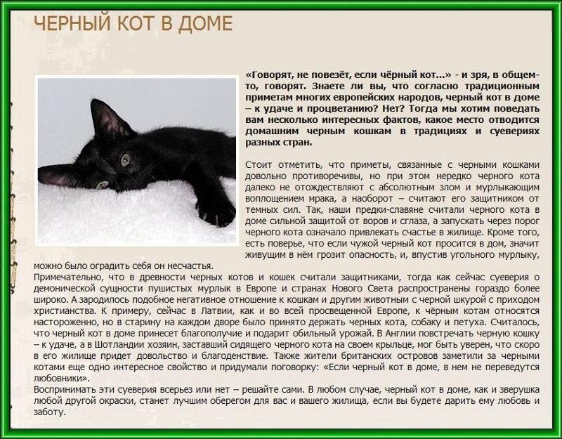Прибилась кошка к дому - приметы и народные суеверия