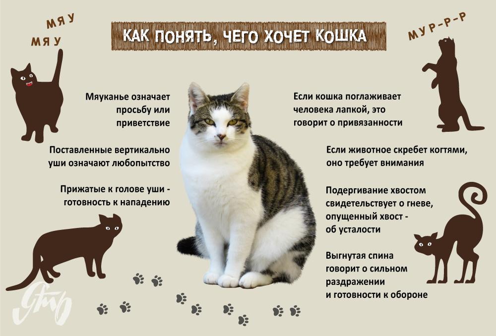 """Что делать, если котенок не ест: советы ветеринаров   блог ветклиники """"беланта"""""""