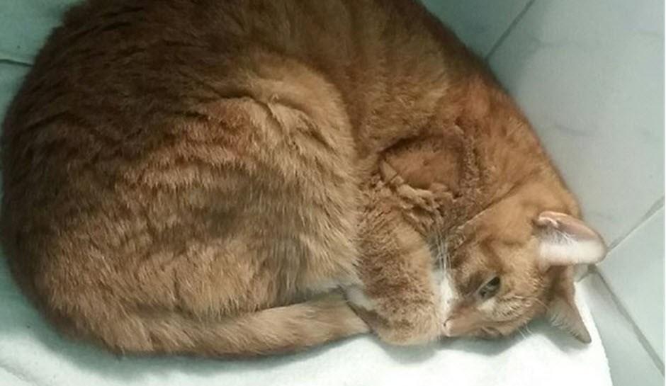 Почему кошка плохо ест: плохой аппетит у кошки - симптом заболевания или нормальное явление?