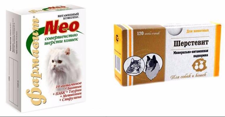 Источники витаминов для кошки | ветбум