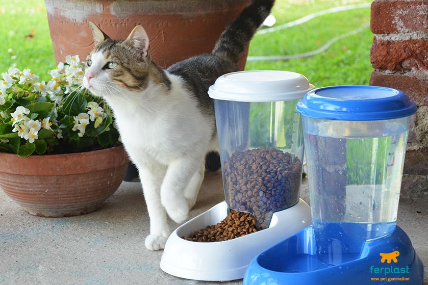 Автокормушка для кошек своими руками: объясняем основательно