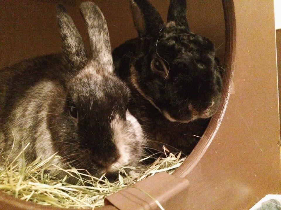 Карликовый кролик: сколько живут породы, уход и содержание