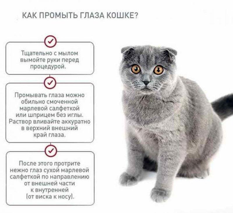 Как помочь коту при вязке если кошка агрессивна как помочь коту при вязке правила для владельцев