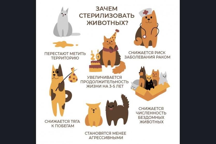 Кастрированные коты: метят или нет и почему