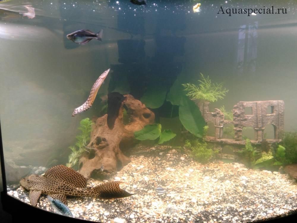 Почему пахнет вода в аквариуме и что с этим делать