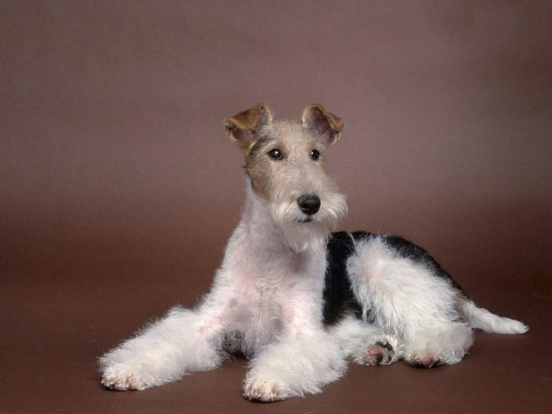 Большие породы собак: список представителей с фото