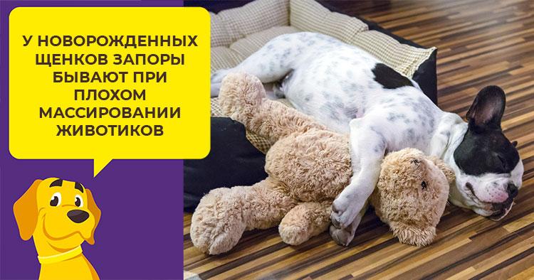 Слабительное для собак — статья от ветеринара