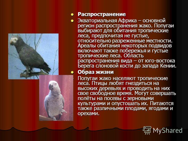Сколько лет может жить попугай жако в домашних условиях и естественной среде обитания