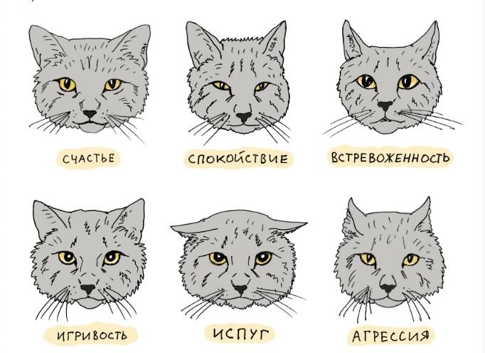 Как показать кошке, что ты ее любишь и понимать ее с «полумяу»