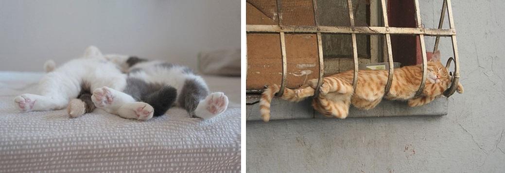 Что означают позы кошек лежа