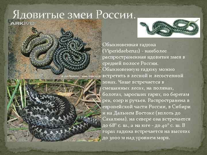 Белая змея — техасский полоз, отличительные особенности а также описание альбиносов других видов