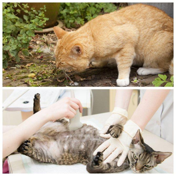 Болезни кошек: признаки и причины   вет005