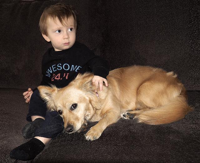 Какую собаку лучше завести в квартире с детьми и кошкой: топ-12 пород и полезные советы