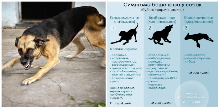 Что делать, если собаку тошнит: причины, виды и опасность рвоты у животного