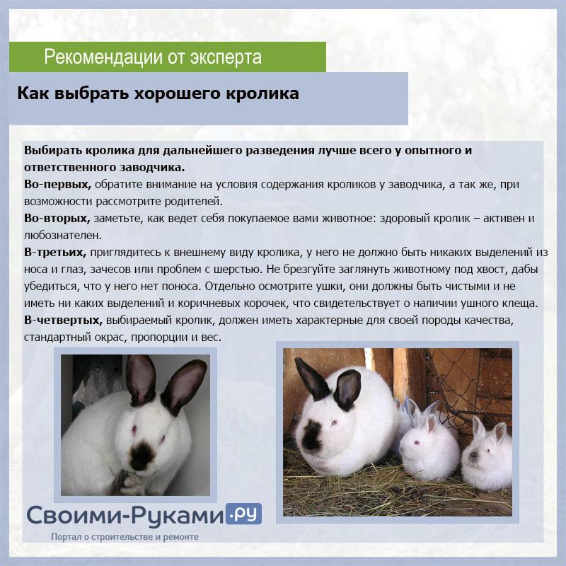 Сколько живут декоративные кролики в домашних условиях, как определить возраст