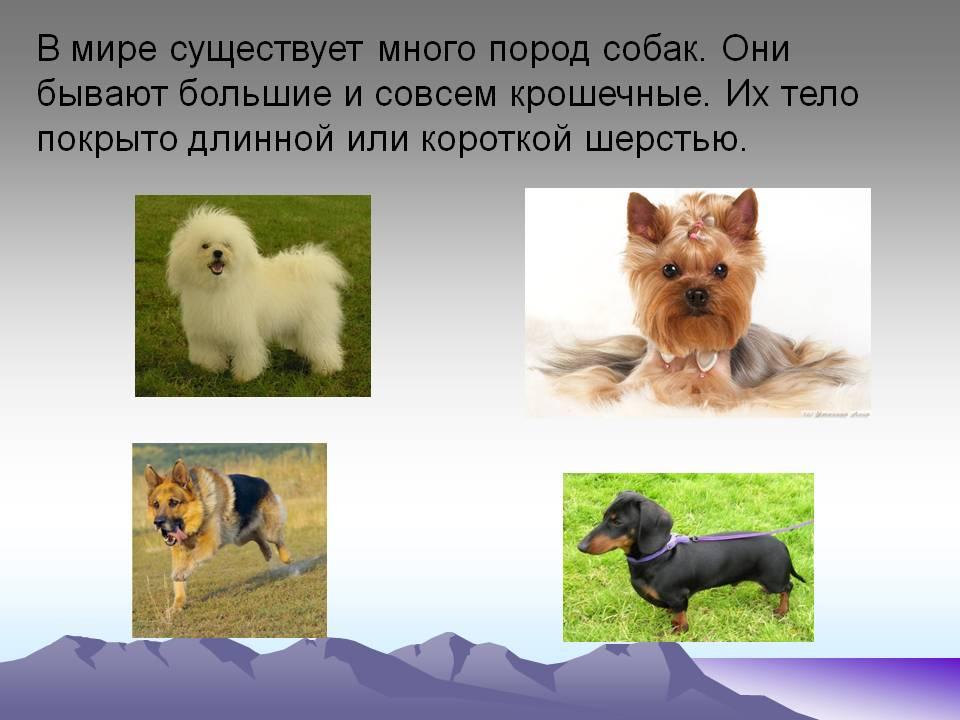 Сколько всего чистокровных пород собак сколько их