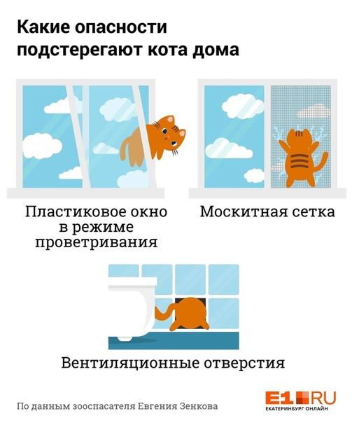 Чем травить кошек во дворе частного дома