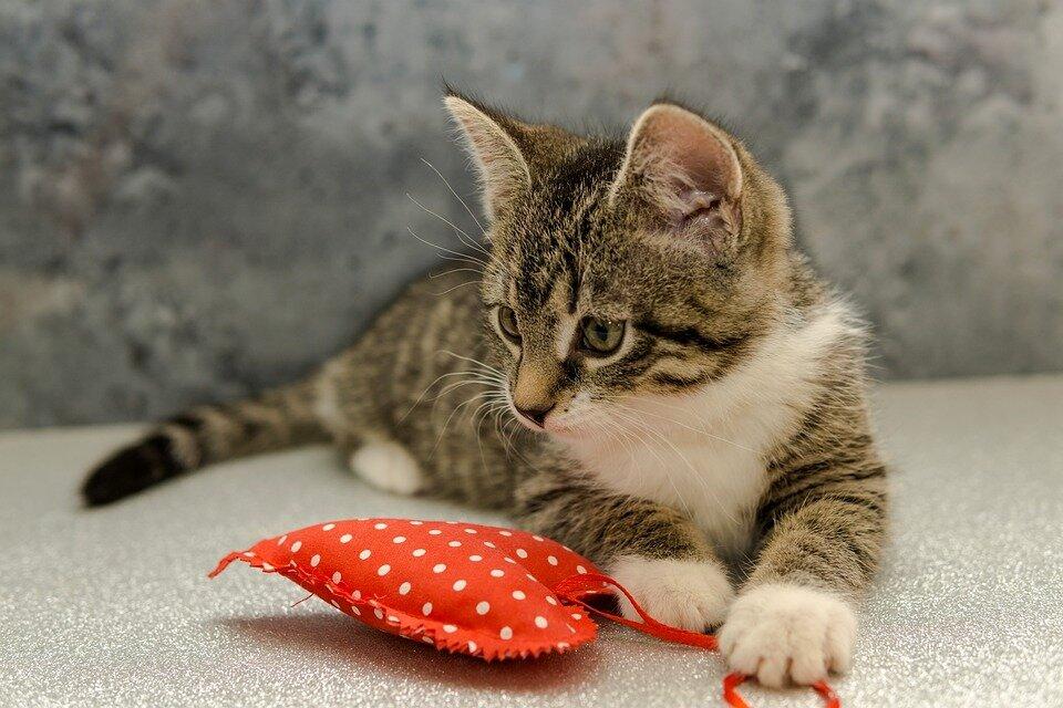 Cat toy test - сравнение. com 2021