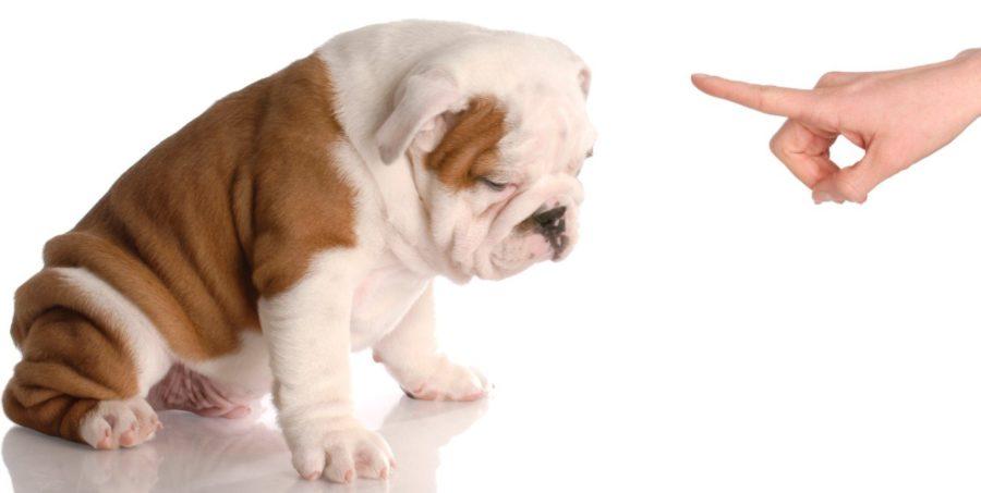 Как воспитать собаку, неприбегая кнасилию? 6полезных кинологических секретов — нож