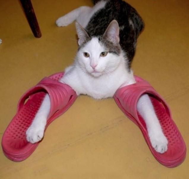 Как быстро приучить котенка ходить в лоток