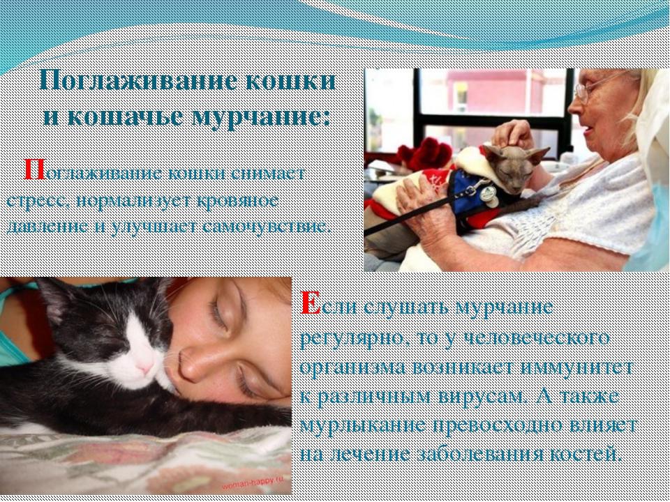 О чём говорит отношение к котам - советки всем!