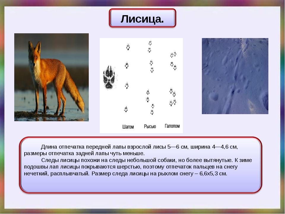 Волчьи следы на песке. след собаки и волка: отличия отпечатков