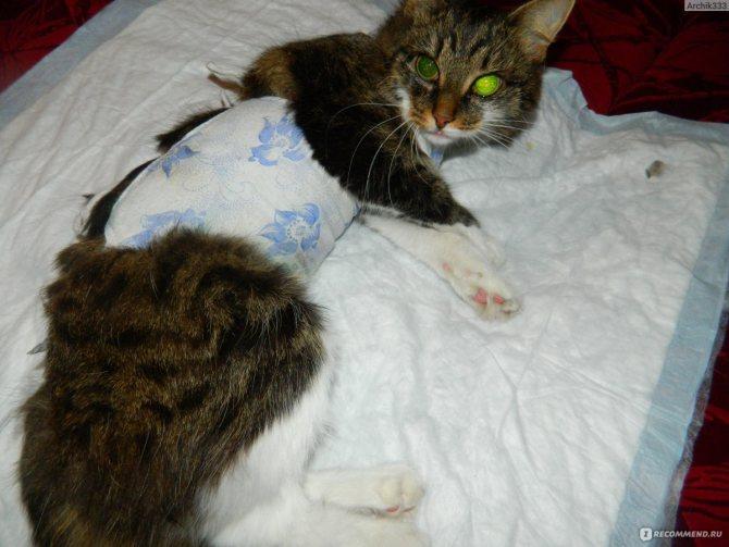 Сколько кошка отходит после наркоза после стерилизации | как долго, выход