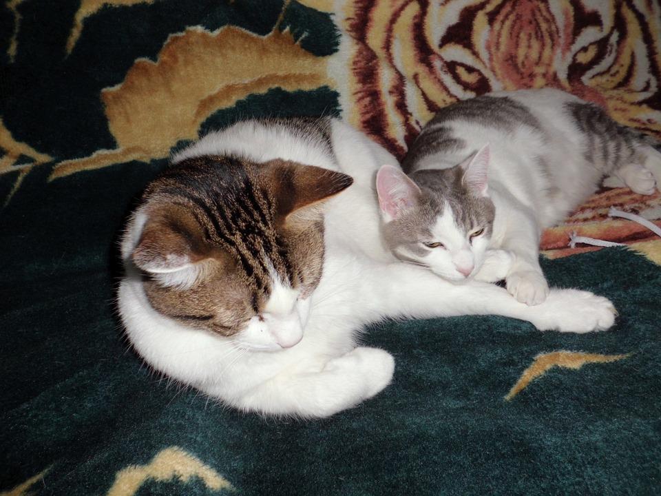 Сон кошек или где кошка любит спать?