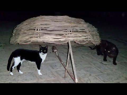 Как поймать бездомного кота - wikihow