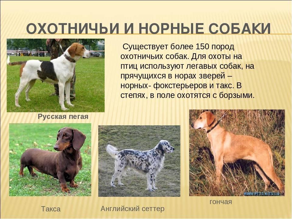 Лучшие служебные собаки. служебные собаки: породы
