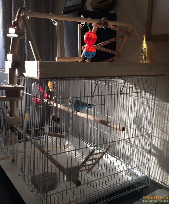 Клетка для попугая своими руками: как и из чего сделать в домашних условиях, видео и фото