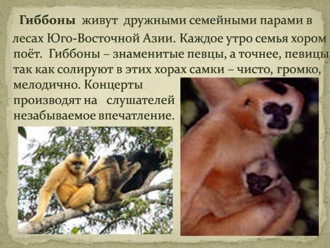 Где живут обезьяны: разделение приматов на зоны обитания