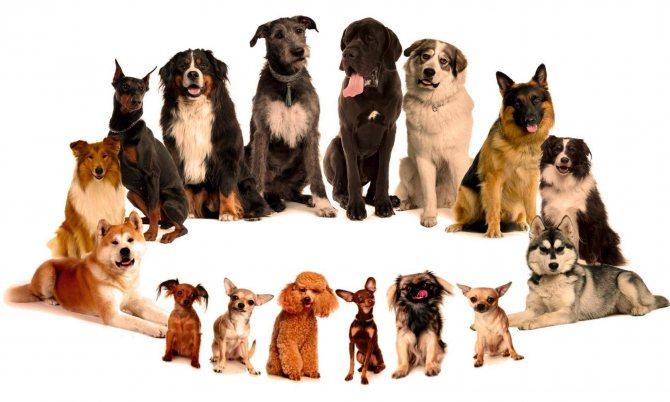 Топ-70 маленьких пород собак