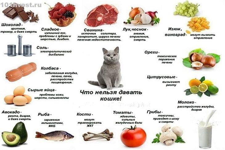 Можно ли кошкам сырое мясо