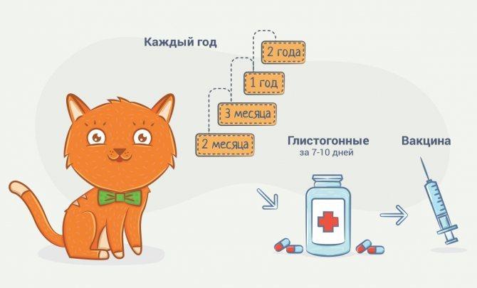 Бывают ли у кошек месячные — как часто и какова их продолжительность?   hill's pet