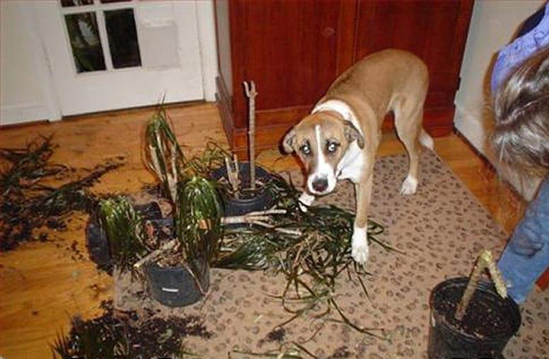 Что делают собаки когда никого нет дома — фото