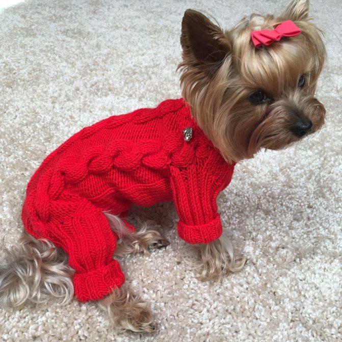 Вязание одежды для собак схема. схемы вязания для маленьких собак. как связать собаке свитер для начинающих спицами. вязание для собак схемы описание, комбинезон, костюм, шапка, спицами, крючком. схемы вязания для собак