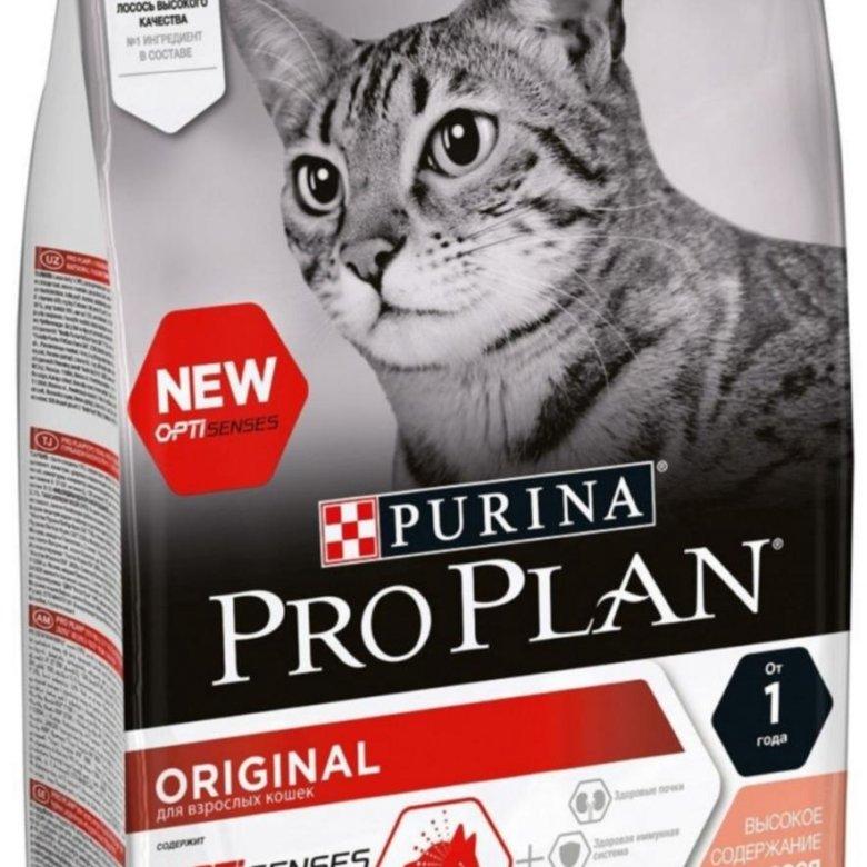 Корм проплан для кошек: отзывы ветеринаров и независимых экспертов о корме pro plan