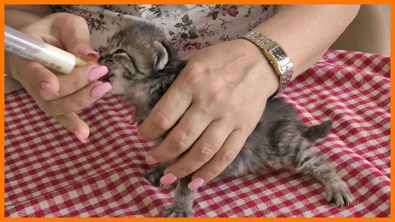 Кошка не ест: причины и решения   optimeal