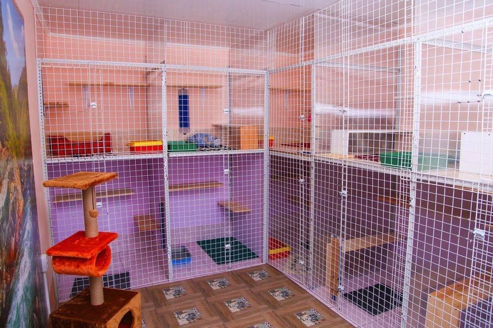 Зоогостиница (гостиница) для передержки кошек, как выбрать лучшую? ответ на petstory