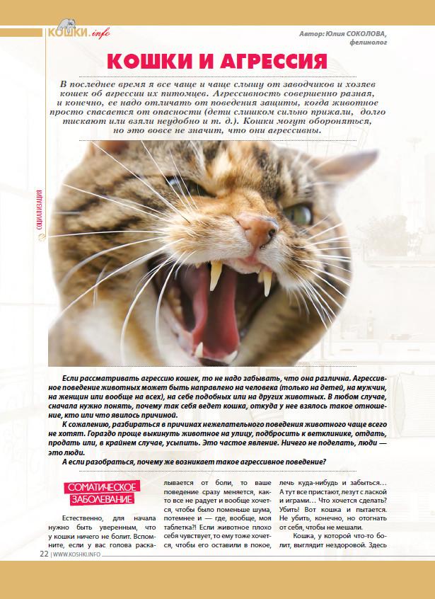 Агрессия кошки: виды, причины и что делать, если кошка кусается и нападает на хозяев