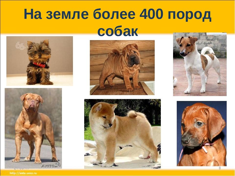 Сколько видов породы собак