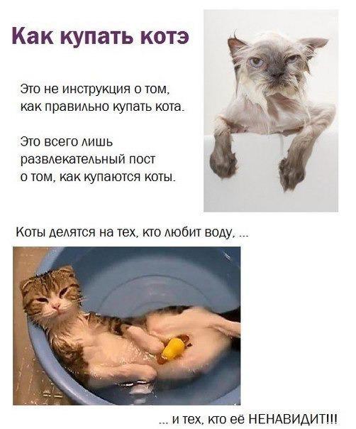 Купание кота: правила процедуры, советы для хозяев пугливых животных, подготовка и поэтапное описание мытья, альтернативные способы
