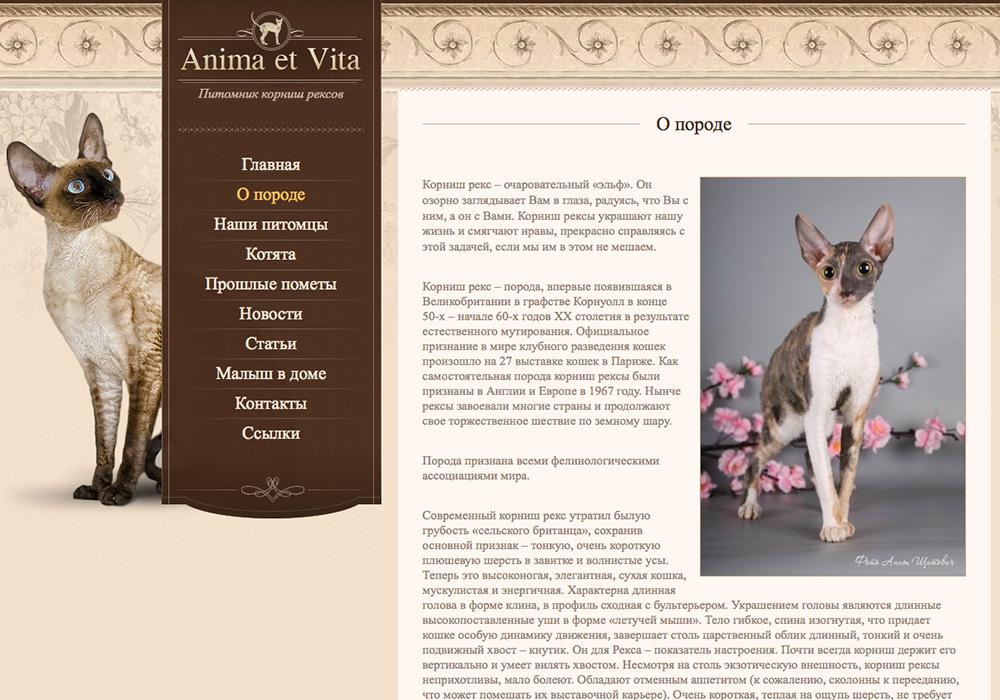Корниш-рекс: описание породы, характер и происхождение, цена