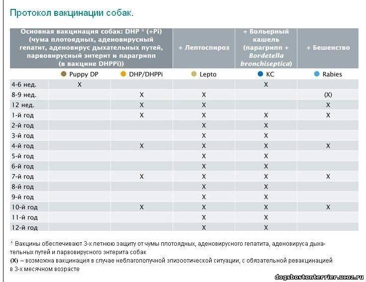 Прививки щенкам до года: таблица вакцинации